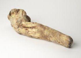 horseradish_root